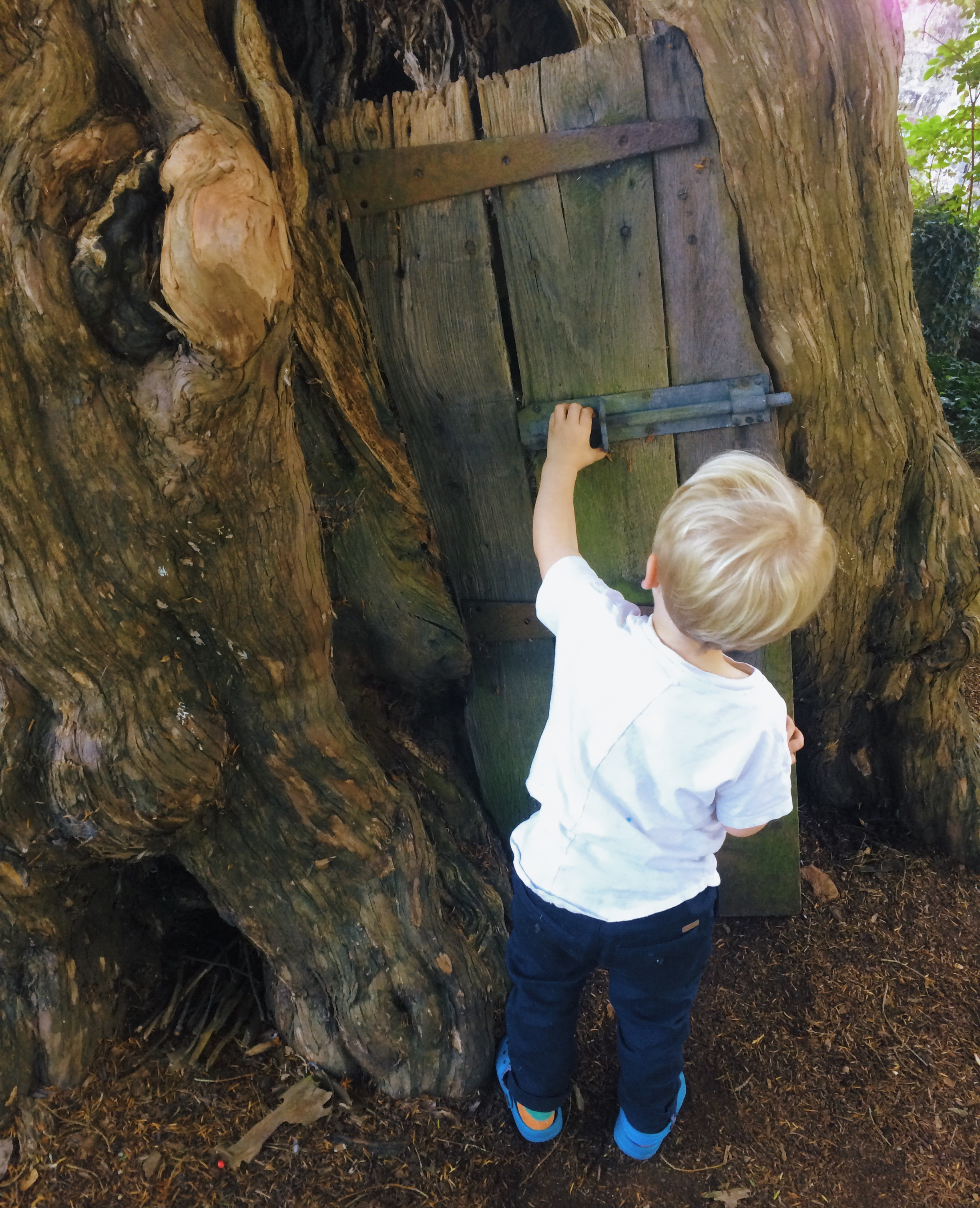 woodland activities with children