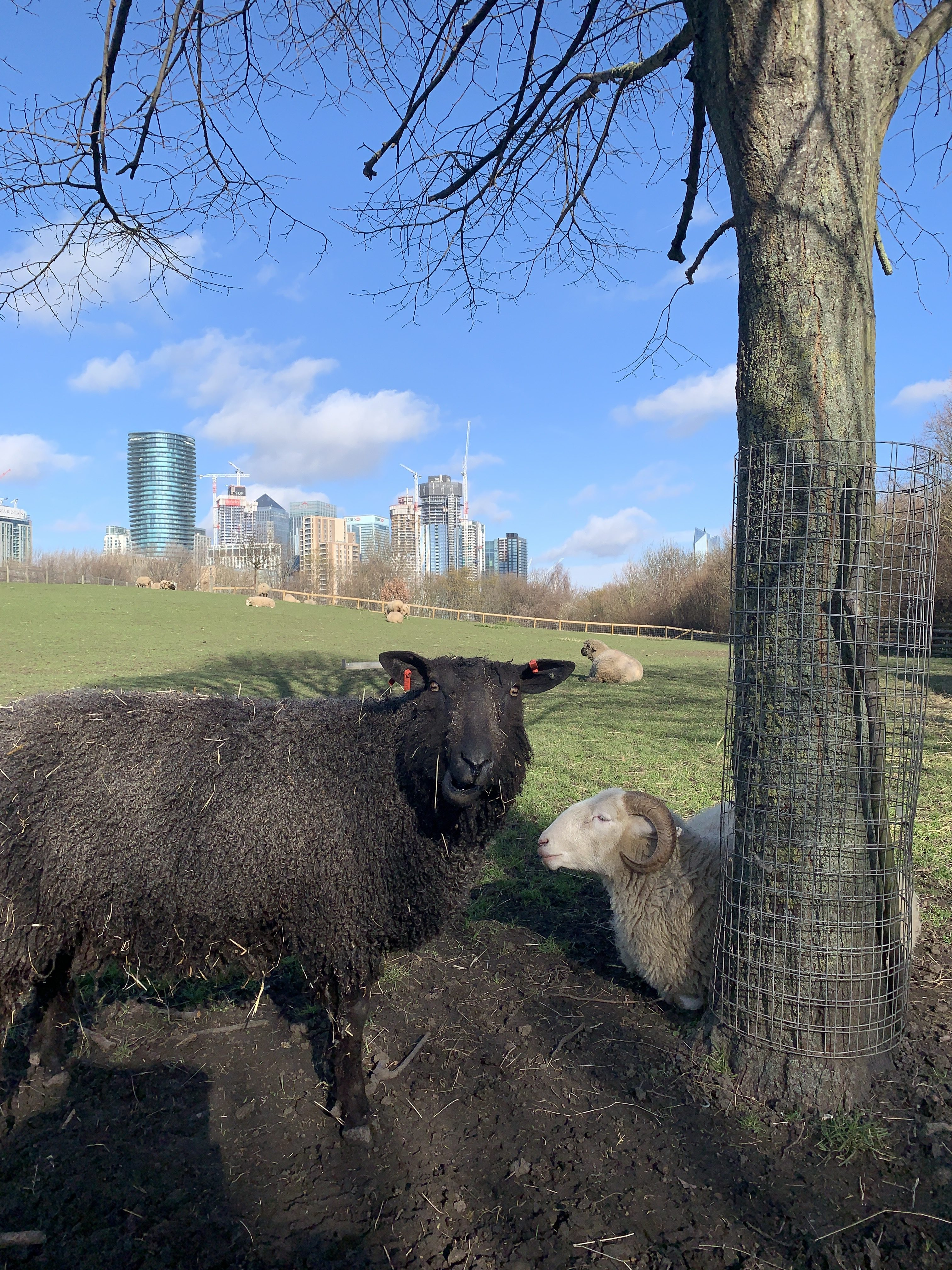 Things To Do In Greenwich And Blackheath With Kids The