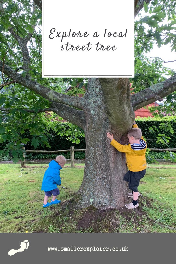 Local street tree