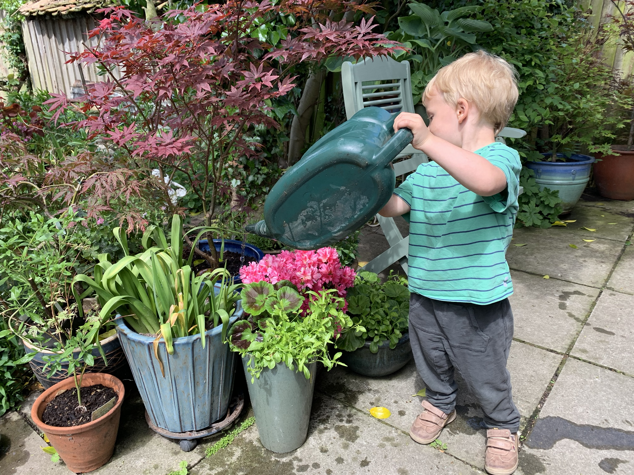 Garden wildlife, boy watering garden plants