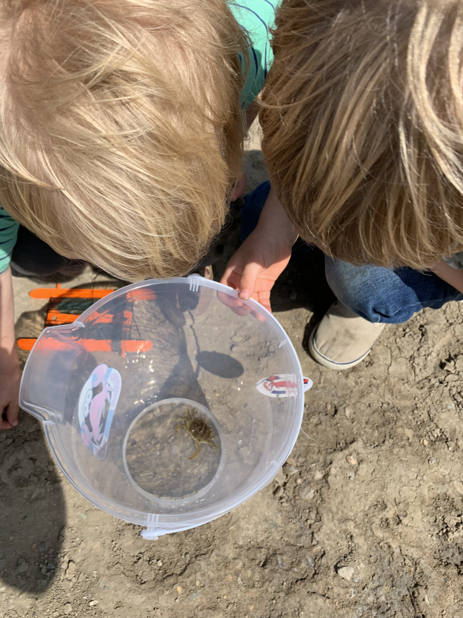 Crabbing in Walberswick, boys look at crab in bucket