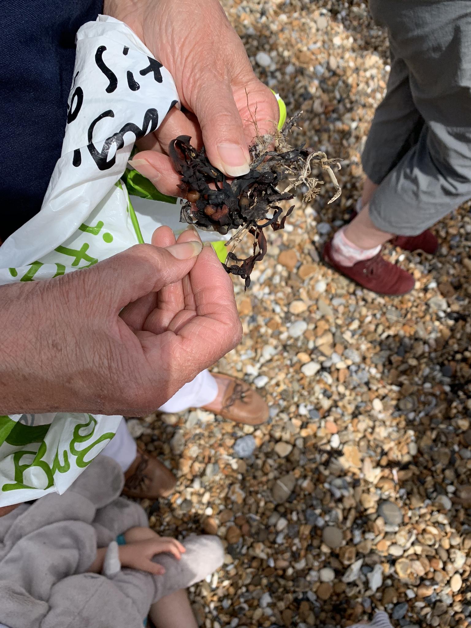 Beachcombing with kids, looking at seaweed