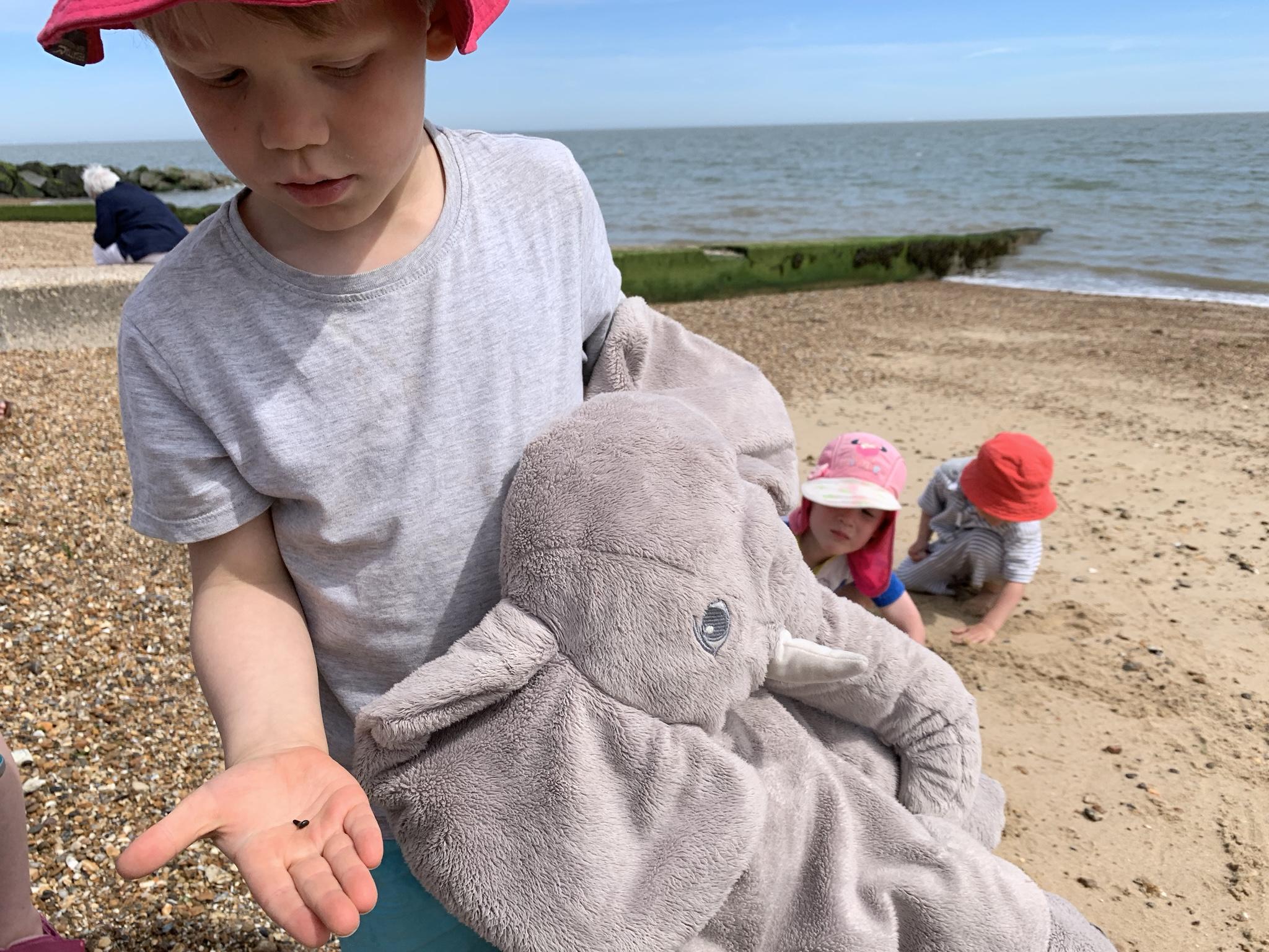 Beachcombing with kids, Shark's tooth Felixstowe Beach