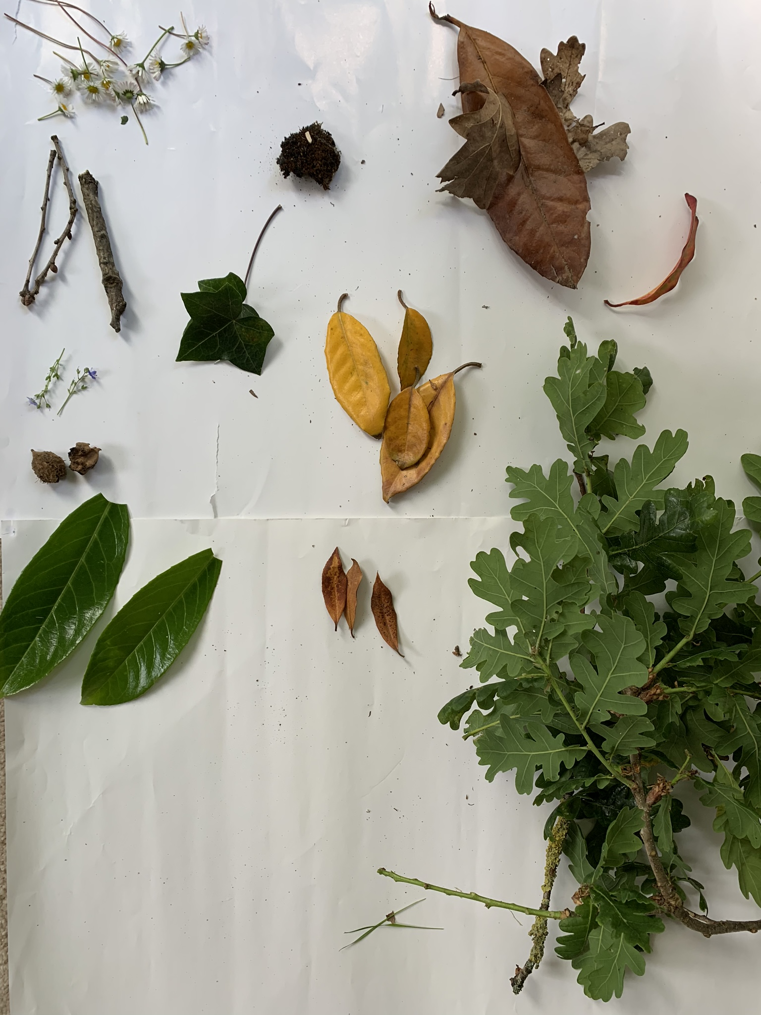 Making nature creatures, leaves collected from the garden for art