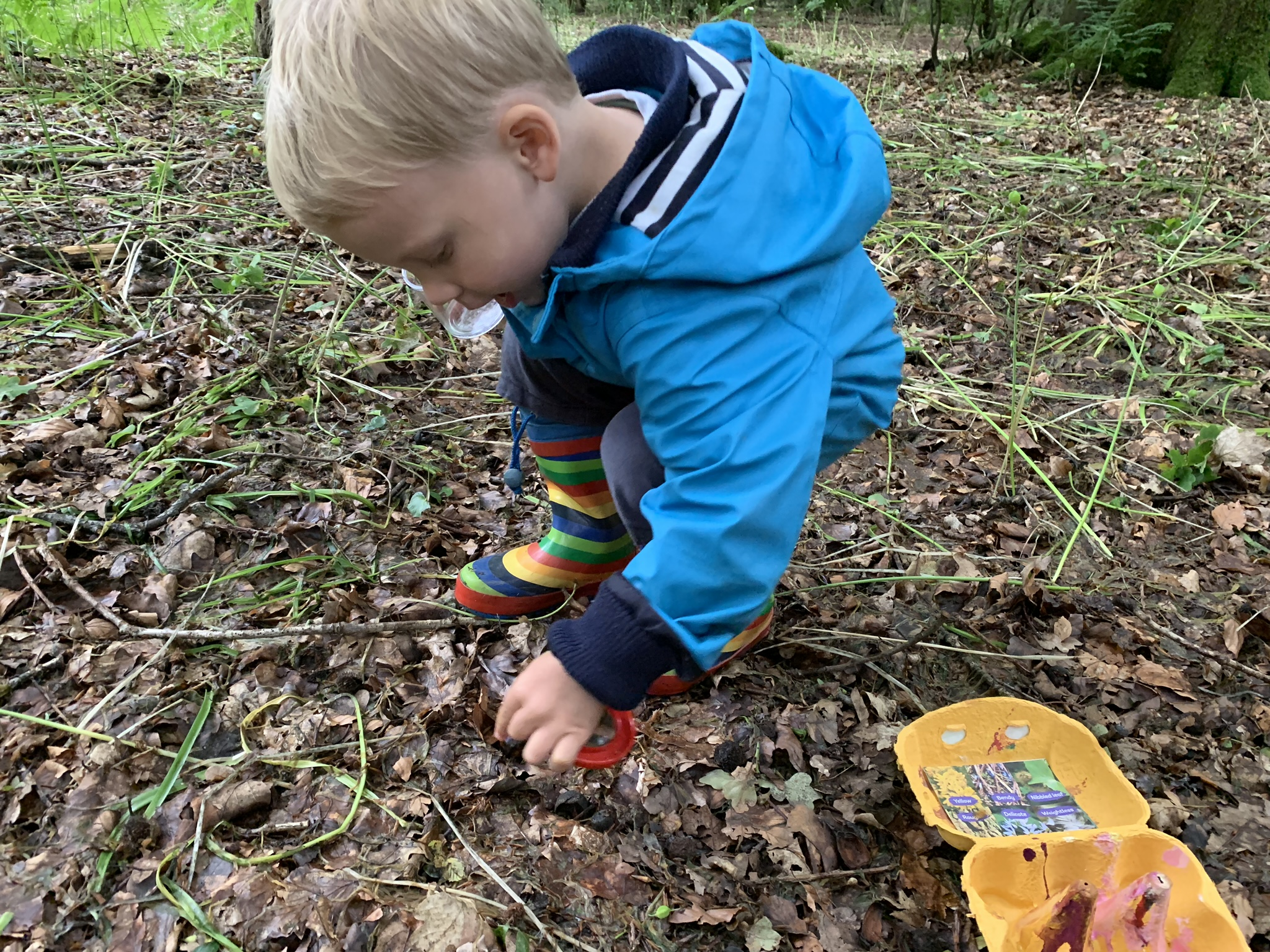 Eggbox scavenger hunt, toddler in woods