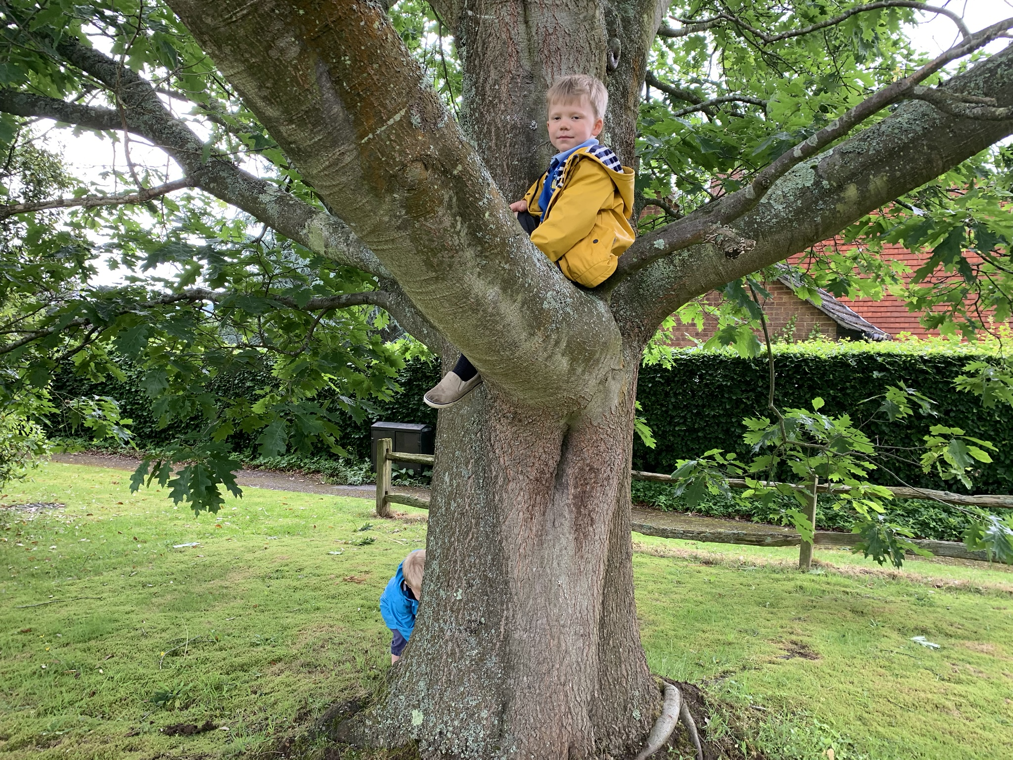 Local street tree, boy climbing tree